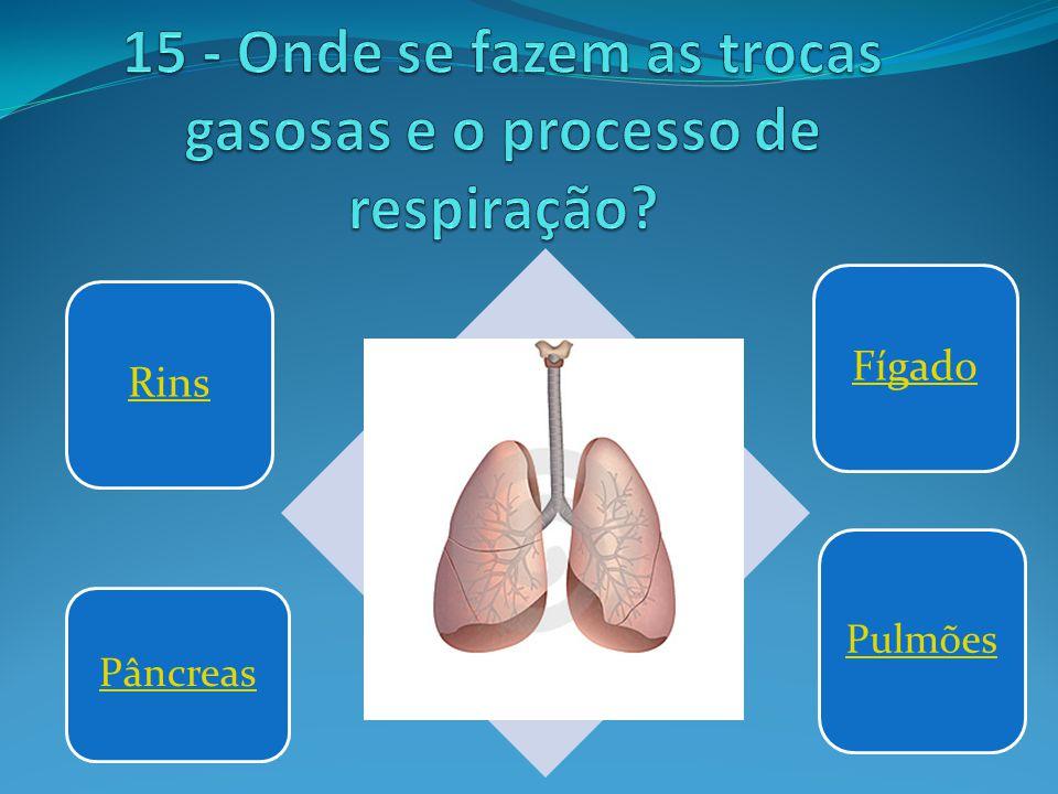 Rins Fígado Pâncreas Pulmões