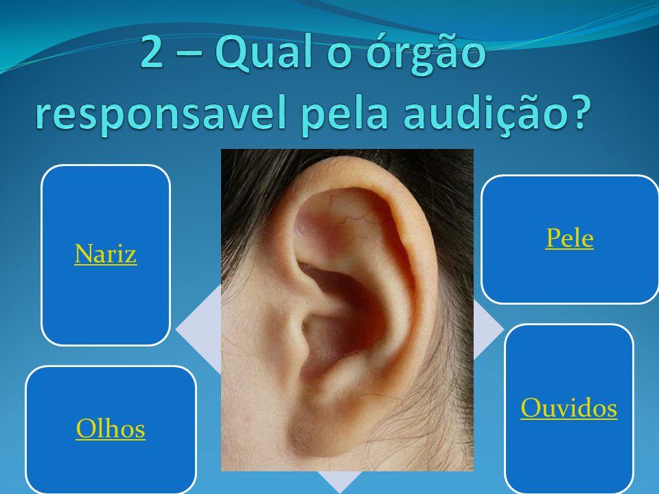 Nariz PeleOlhos Ouvidos
