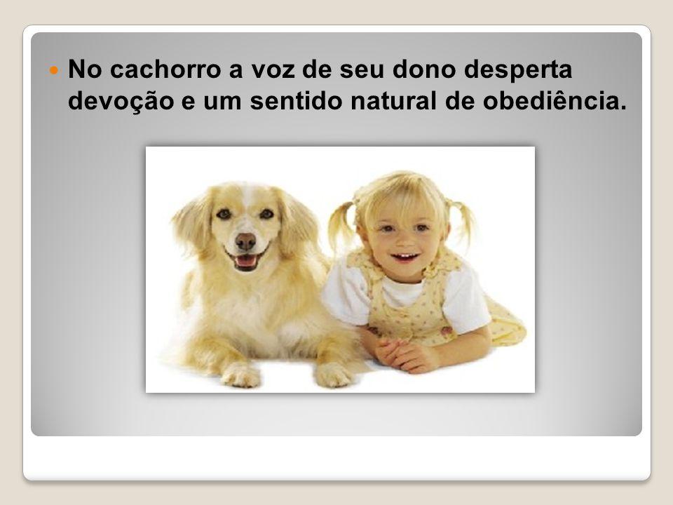 No cachorro a voz de seu dono desperta devoção e um sentido natural de obediência.