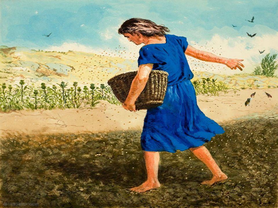 No Evangelho, com a Parábola da SEMENTE e do SEMEADOR, vemos que o fruto da Palavra de Deus depende da qualidade da terra.