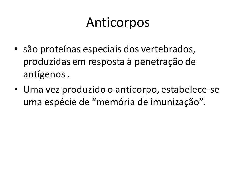 Anticorpos são proteínas especiais dos vertebrados, produzidas em resposta à penetração de antígenos. Uma vez produzido o anticorpo, estabelece-se uma