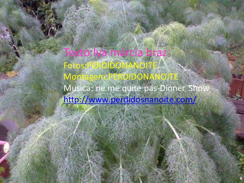 Texto:lya márcia braz Fotos:PERDIDONANOITE Montagem:PERDIDONANOITE Musica: ne me quite pas-Dinner Show http://www.perdidosnanoite.com/
