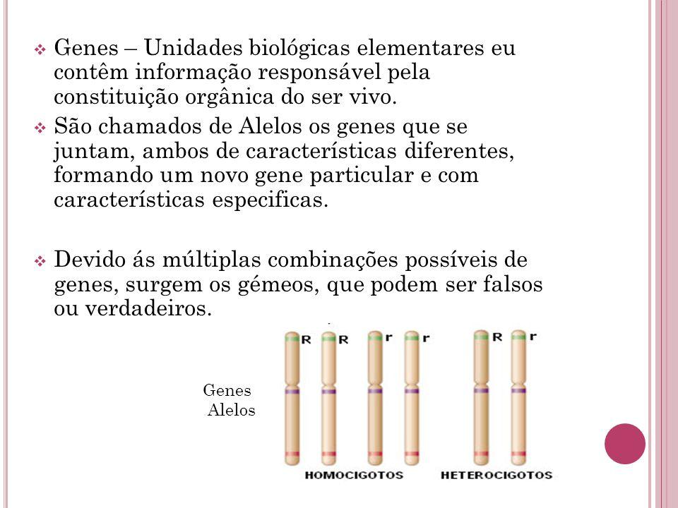  Genes – Unidades biológicas elementares eu contêm informação responsável pela constituição orgânica do ser vivo.  São chamados de Alelos os genes q
