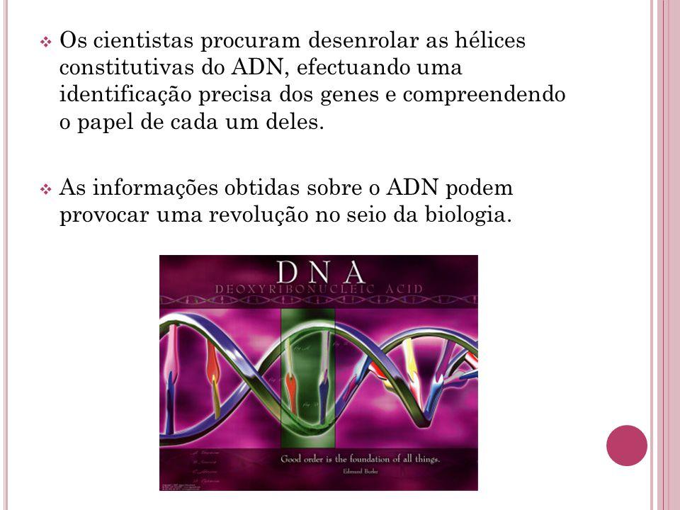  Os cientistas procuram desenrolar as hélices constitutivas do ADN, efectuando uma identificação precisa dos genes e compreendendo o papel de cada um
