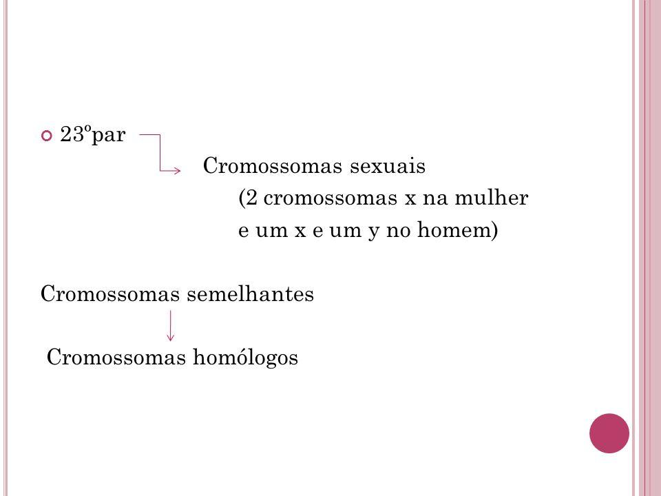 23ºpar Cromossomas sexuais (2 cromossomas x na mulher e um x e um y no homem) Cromossomas semelhantes Cromossomas homólogos