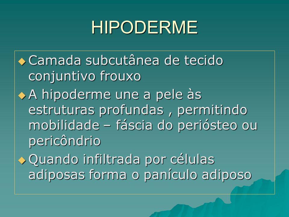 HIPODERME  Camada subcutânea de tecido conjuntivo frouxo  A hipoderme une a pele às estruturas profundas, permitindo mobilidade – fáscia do perióste