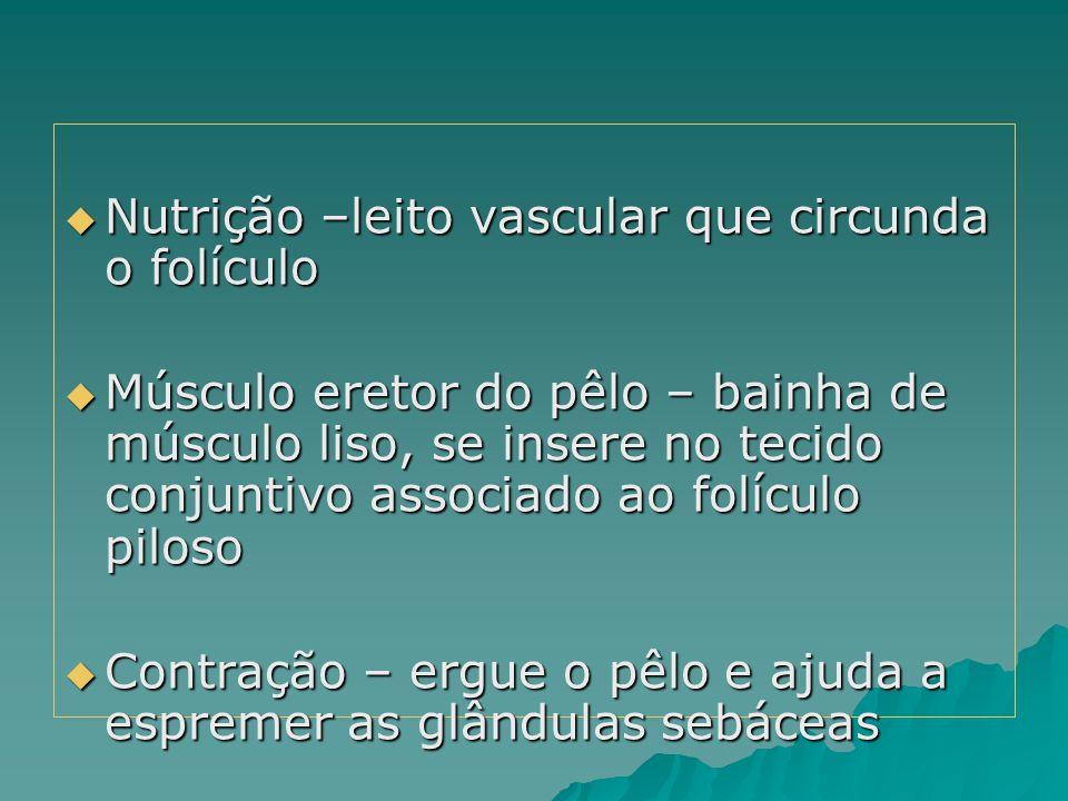  Nutrição –leito vascular que circunda o folículo  Músculo eretor do pêlo – bainha de músculo liso, se insere no tecido conjuntivo associado ao folí