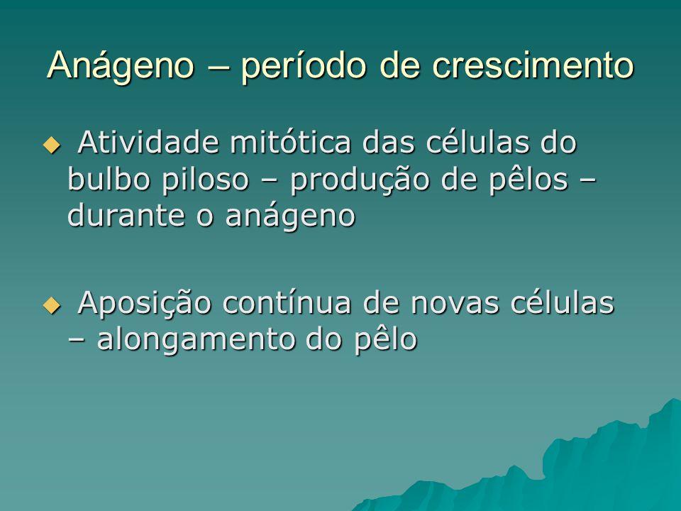 Anágeno – período de crescimento  Atividade mitótica das células do bulbo piloso – produção de pêlos – durante o anágeno  Aposição contínua de novas