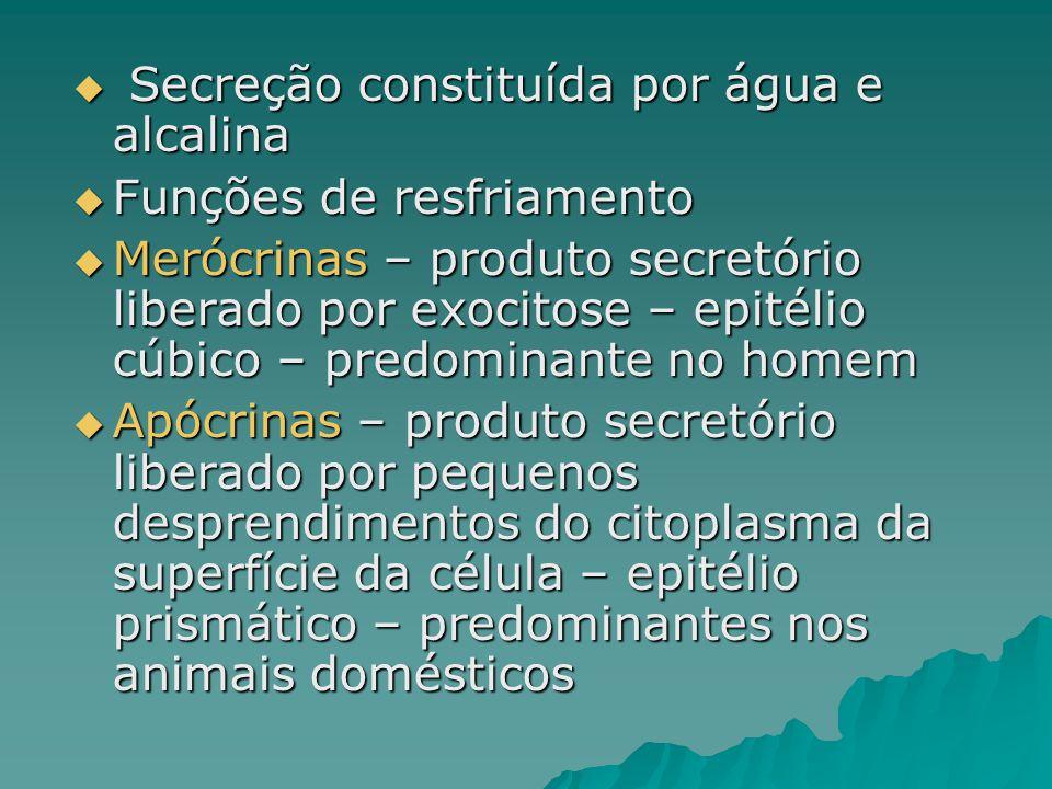  Secreção constituída por água e alcalina  Funções de resfriamento  Merócrinas – produto secretório liberado por exocitose – epitélio cúbico – pred