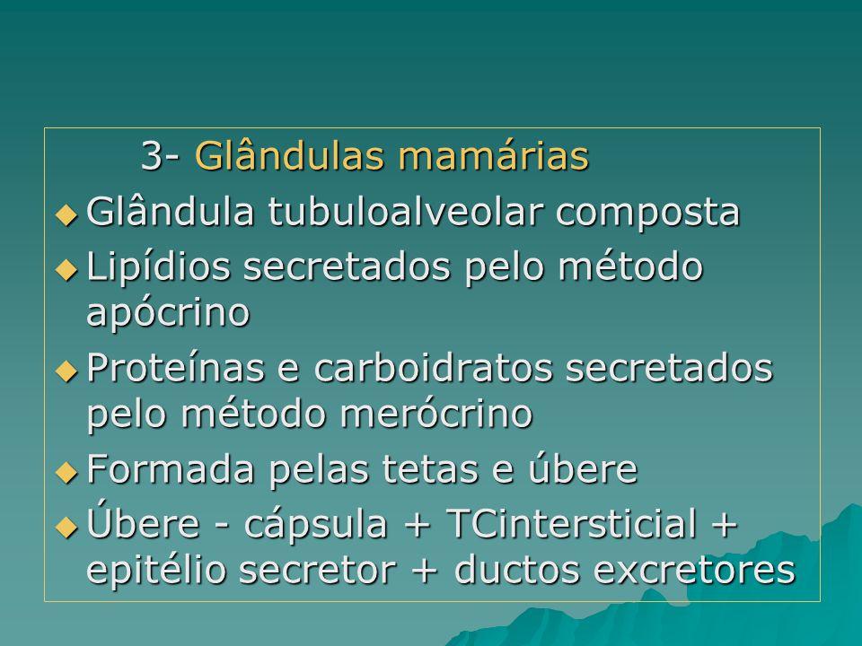 3- Glândulas mamárias  Glândula tubuloalveolar composta  Lipídios secretados pelo método apócrino  Proteínas e carboidratos secretados pelo método
