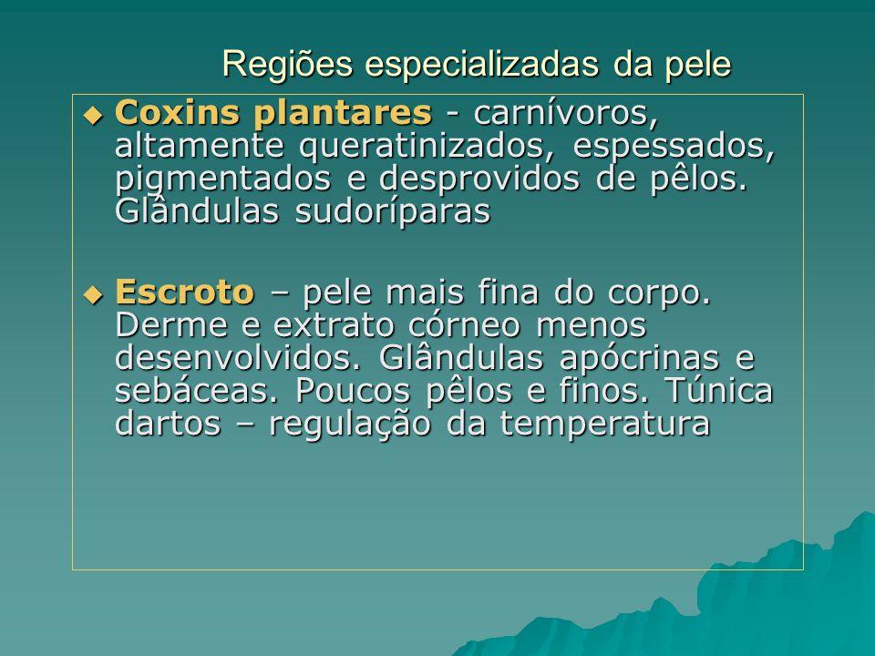 Regiões especializadas da pele  Coxins plantares - carnívoros, altamente queratinizados, espessados, pigmentados e desprovidos de pêlos. Glândulas su