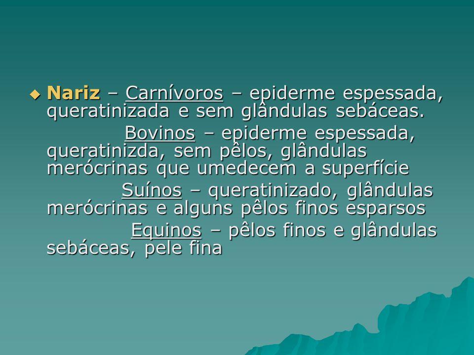  Nariz – Carnívoros – epiderme espessada, queratinizada e sem glândulas sebáceas. Bovinos – epiderme espessada, queratinizda, sem pêlos, glândulas me