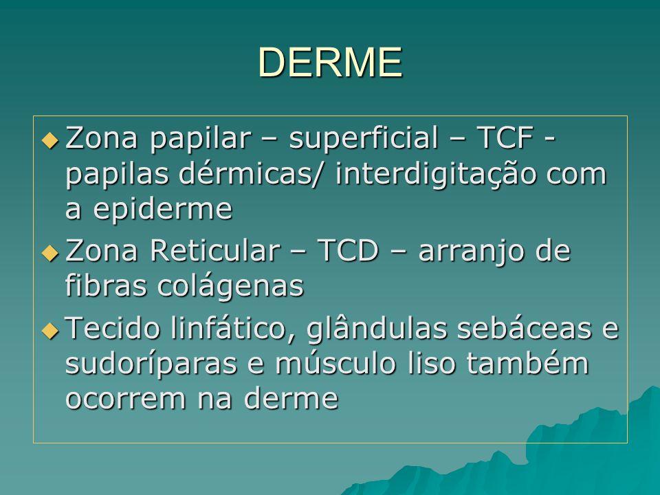 DERME  Zona papilar – superficial – TCF - papilas dérmicas/ interdigitação com a epiderme  Zona Reticular – TCD – arranjo de fibras colágenas  Teci