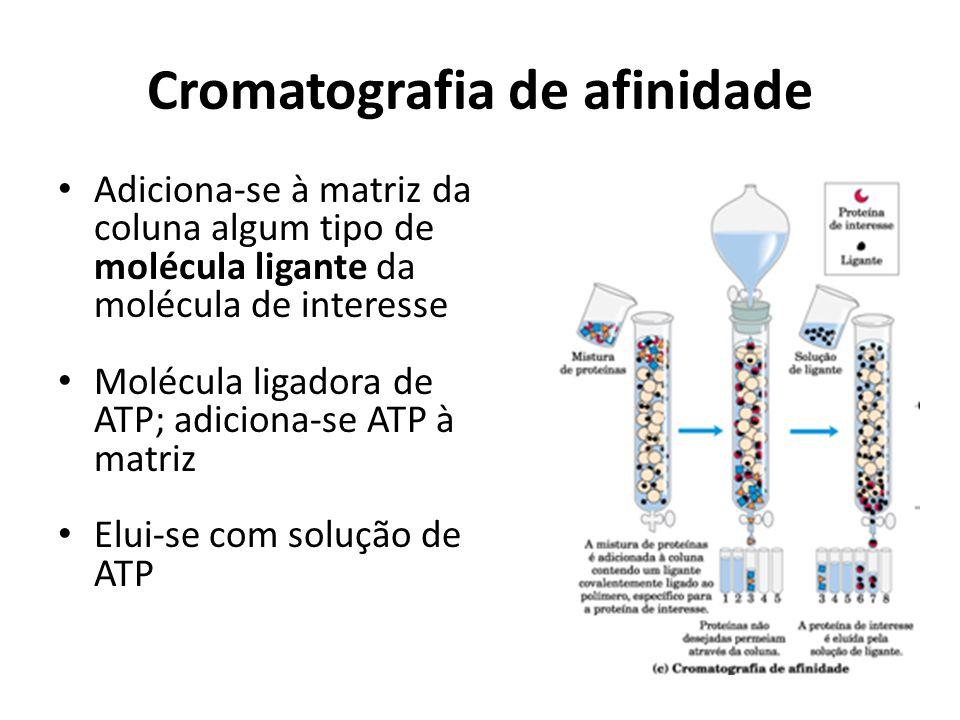 Cromatografia de afinidade Adiciona-se à matriz da coluna algum tipo de molécula ligante da molécula de interesse Molécula ligadora de ATP; adiciona-s