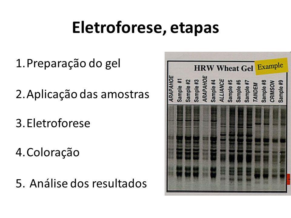 Eletroforese, etapas 1.Preparação do gel 2.Aplicação das amostras 3.Eletroforese 4.Coloração 5. Análise dos resultados