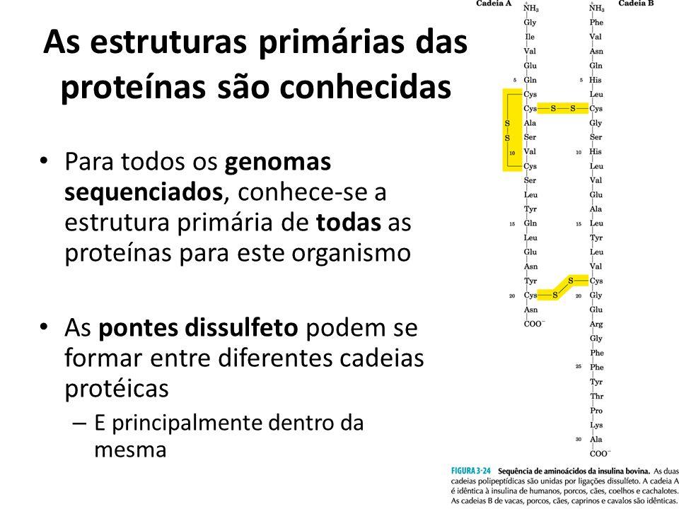 As estruturas primárias das proteínas são conhecidas Para todos os genomas sequenciados, conhece-se a estrutura primária de todas as proteínas para es