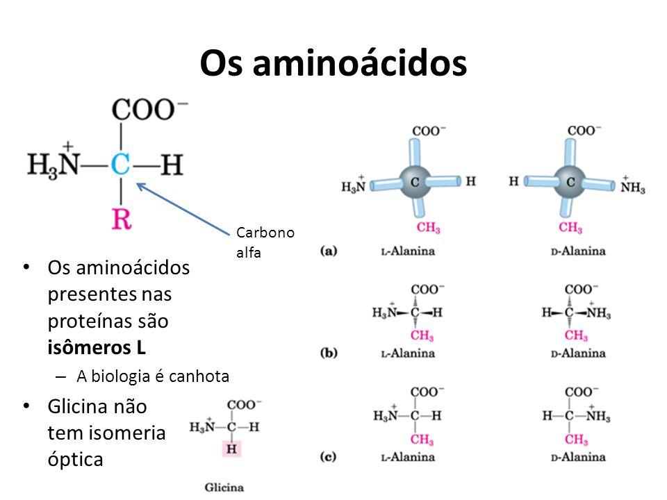 Os aminoácidos Os aminoácidos presentes nas proteínas são isômeros L – A biologia é canhota Glicina não tem isomeria óptica Carbono alfa