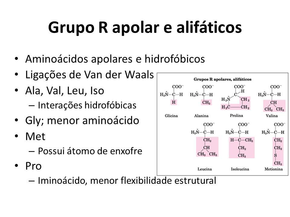 Grupo R apolar e alifáticos Aminoácidos apolares e hidrofóbicos Ligações de Van der Waals Ala, Val, Leu, Iso – Interações hidrofóbicas Gly; menor amin