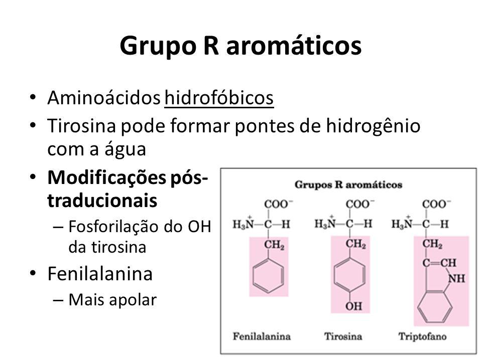 Grupo R aromáticos Aminoácidos hidrofóbicos Tirosina pode formar pontes de hidrogênio com a água Modificações pós- traducionais – Fosforilação do OH d