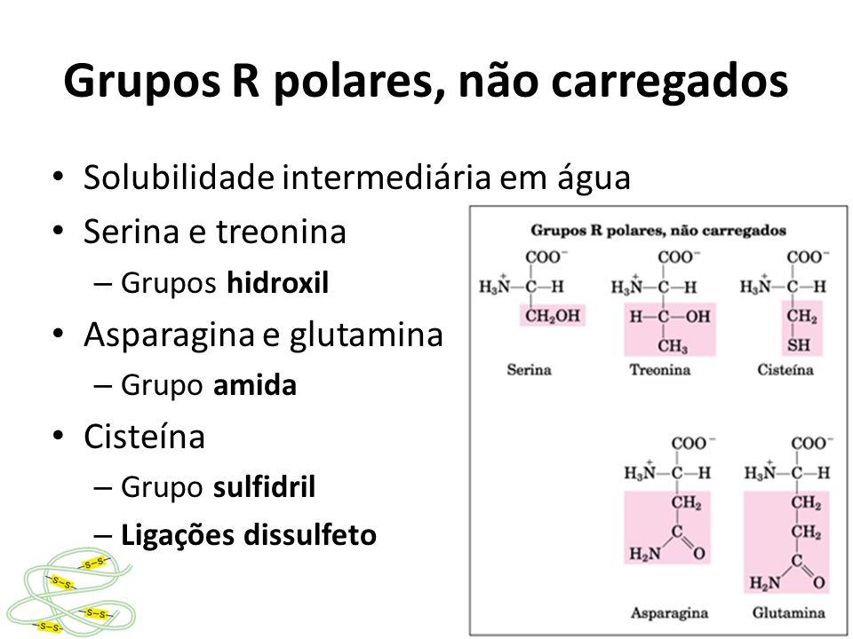 Grupos R carregados Aminoácidos básicos – Carga positiva – Lisina, segundo grupo amino – Arginina, grupo guanidina – Histidina, grupo aromático imidazol Aminoácidos ácidos – Carga negativa – Possuem segundo grupo ácido carboxílico