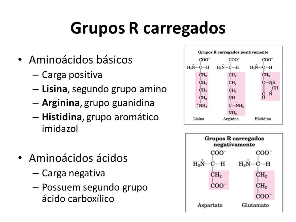 Grupos R carregados Aminoácidos básicos – Carga positiva – Lisina, segundo grupo amino – Arginina, grupo guanidina – Histidina, grupo aromático imidaz