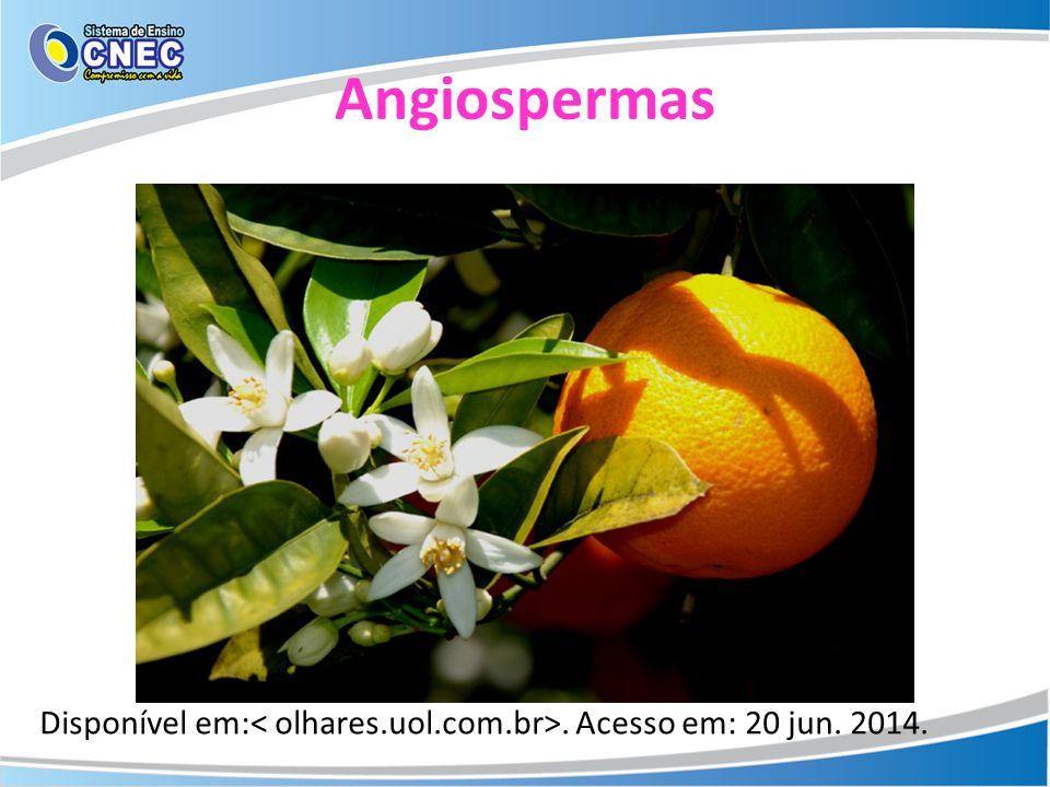 Angiospermas Disponível em:. Acesso em: 20 jun. 2014.
