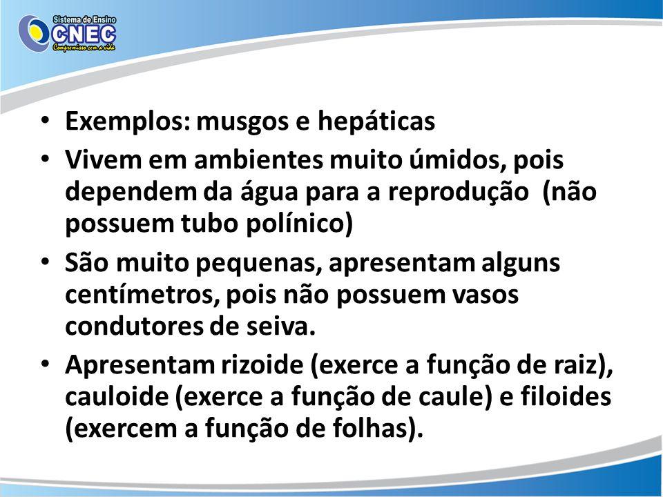 Exemplos: musgos e hepáticas Vivem em ambientes muito úmidos, pois dependem da água para a reprodução (não possuem tubo polínico) São muito pequenas, apresentam alguns centímetros, pois não possuem vasos condutores de seiva.