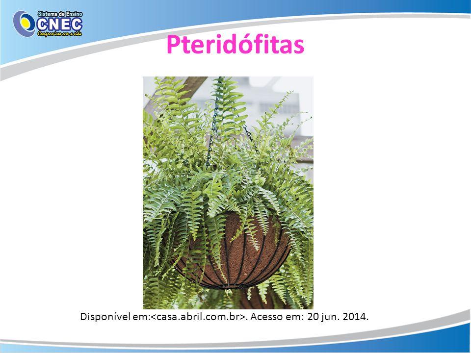 Pteridófitas Disponível em:. Acesso em: 20 jun. 2014.