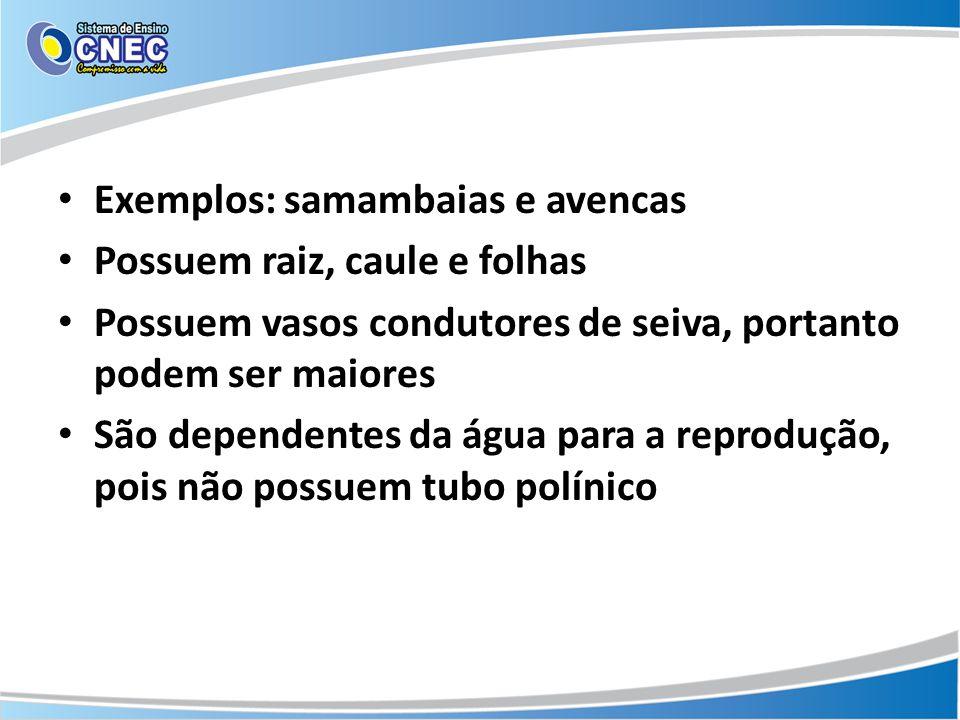 Exemplos: samambaias e avencas Possuem raiz, caule e folhas Possuem vasos condutores de seiva, portanto podem ser maiores São dependentes da água para