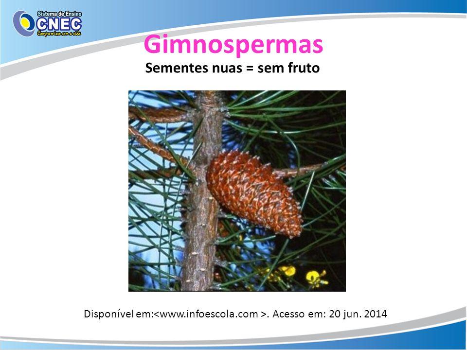 Gimnospermas Disponível em:. Acesso em: 20 jun. 2014 Sementes nuas = sem fruto