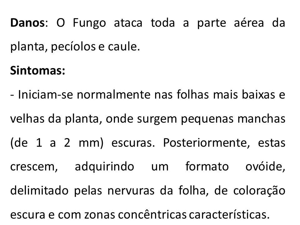 Danos: O Fungo ataca toda a parte aérea da planta, pecíolos e caule. Sintomas: - Iniciam-se normalmente nas folhas mais baixas e velhas da planta, ond