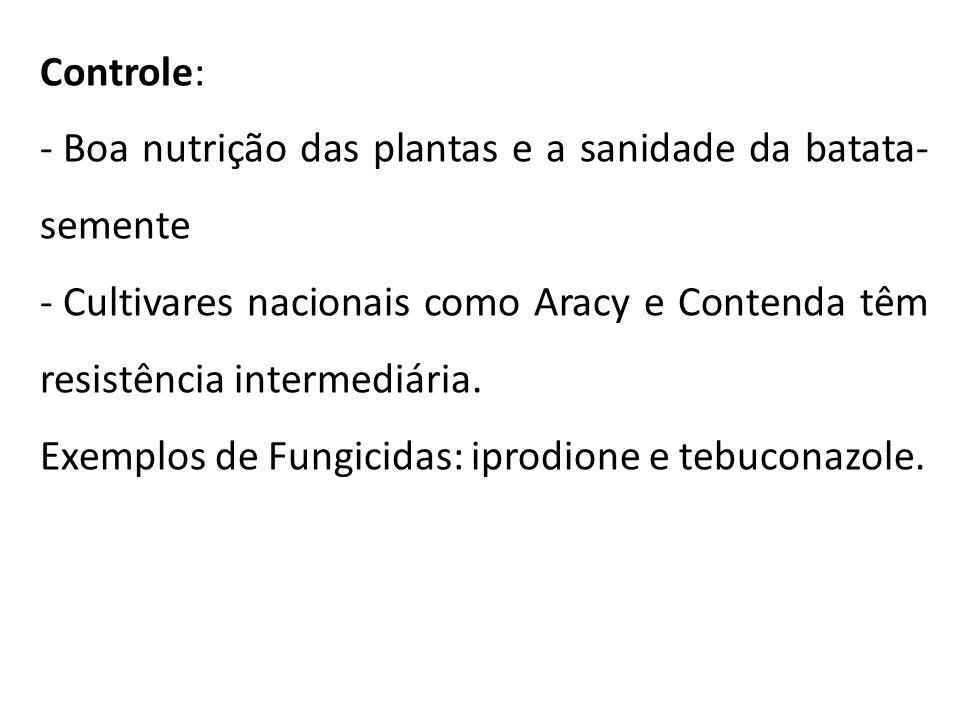 Controle: - Boa nutrição das plantas e a sanidade da batata- semente - Cultivares nacionais como Aracy e Contenda têm resistência intermediária. Exemp
