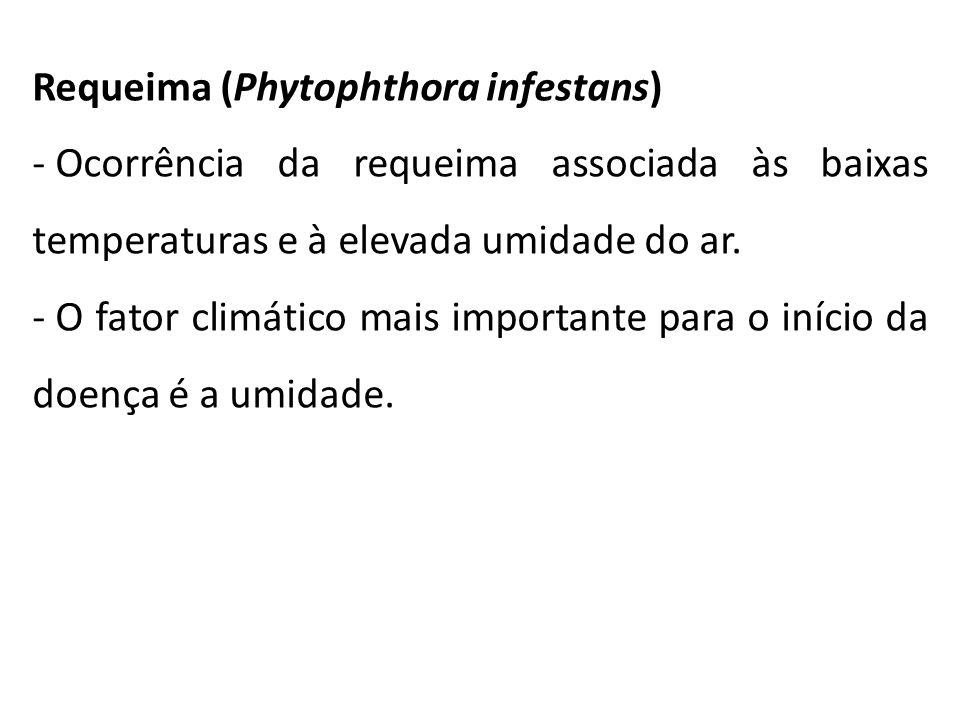 Requeima (Phytophthora infestans) - Ocorrência da requeima associada às baixas temperaturas e à elevada umidade do ar. - O fator climático mais import