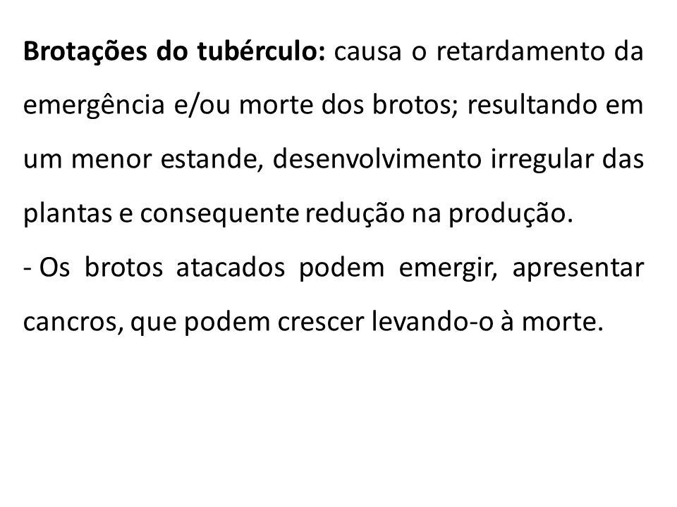Brotações do tubérculo: causa o retardamento da emergência e/ou morte dos brotos; resultando em um menor estande, desenvolvimento irregular das planta