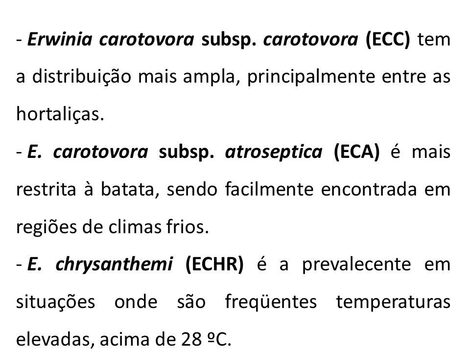 - Erwinia carotovora subsp. carotovora (ECC) tem a distribuição mais ampla, principalmente entre as hortaliças. - E. carotovora subsp. atroseptica (EC