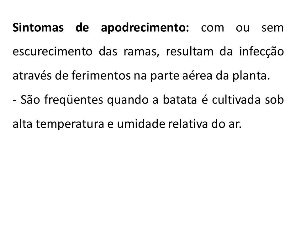 Sintomas de apodrecimento: com ou sem escurecimento das ramas, resultam da infecção através de ferimentos na parte aérea da planta. - São freqüentes q