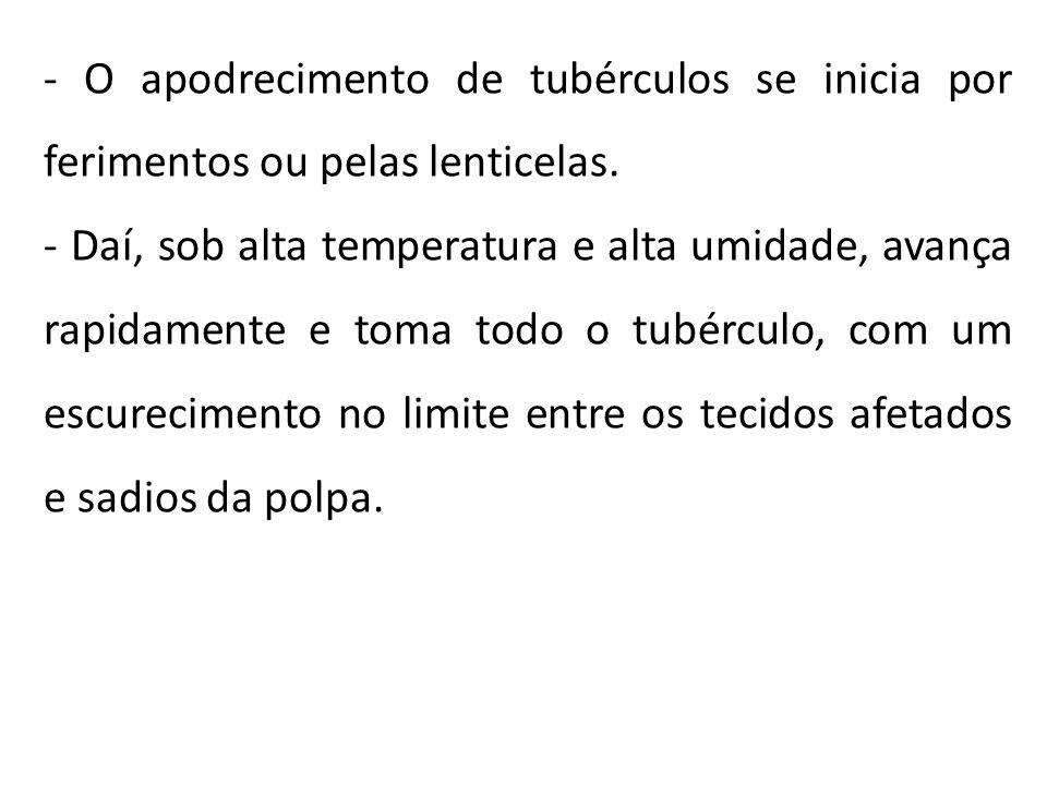 - O apodrecimento de tubérculos se inicia por ferimentos ou pelas lenticelas. - Daí, sob alta temperatura e alta umidade, avança rapidamente e toma to