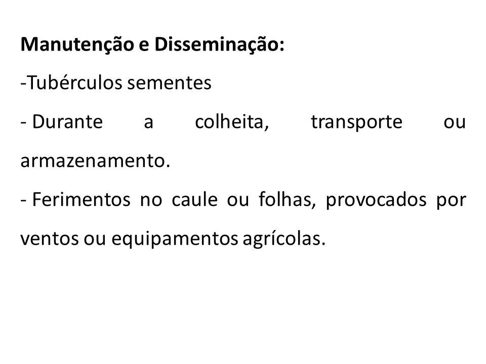 Manutenção e Disseminação: -Tubérculos sementes - Durante a colheita, transporte ou armazenamento. - Ferimentos no caule ou folhas, provocados por ven