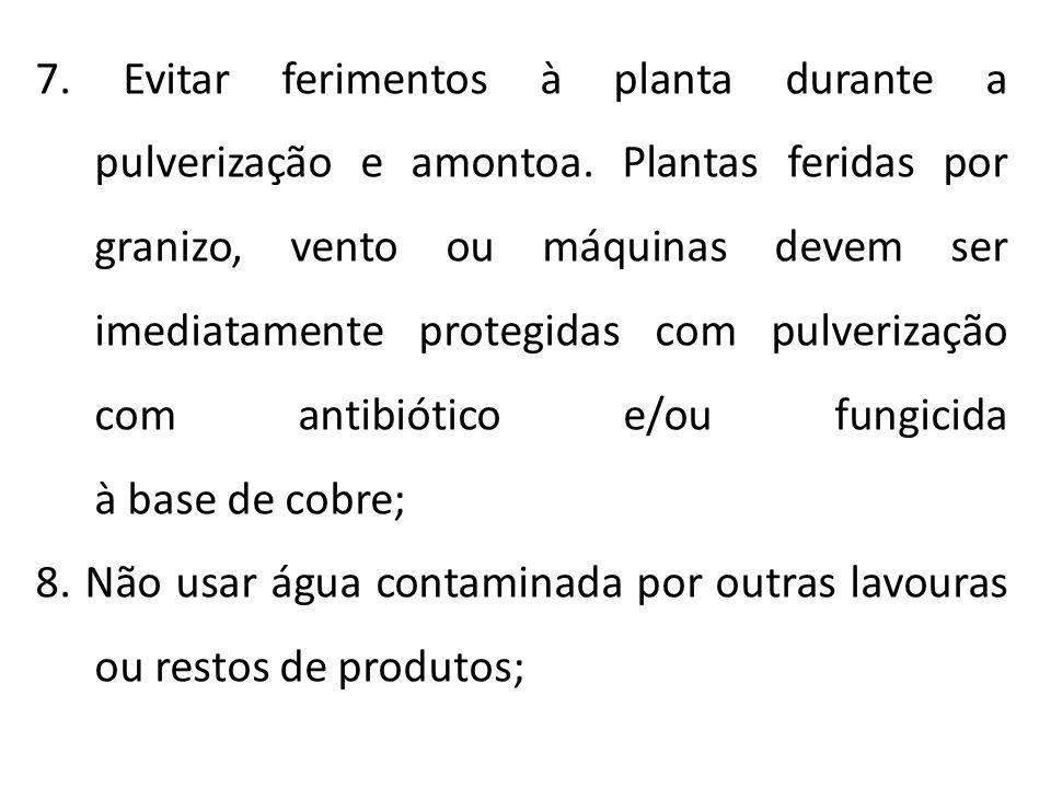 7. Evitar ferimentos à planta durante a pulverização e amontoa. Plantas feridas por granizo, vento ou máquinas devem ser imediatamente protegidas com