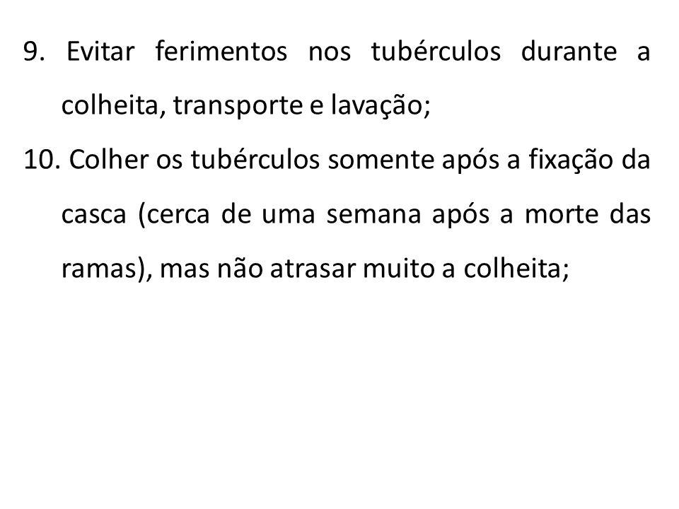 9. Evitar ferimentos nos tubérculos durante a colheita, transporte e lavação; 10. Colher os tubérculos somente após a fixação da casca (cerca de uma s