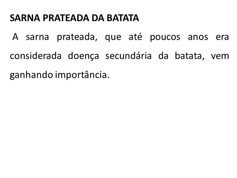 SARNA PRATEADA DA BATATA A sarna prateada, que até poucos anos era considerada doença secundária da batata, vem ganhando importância.