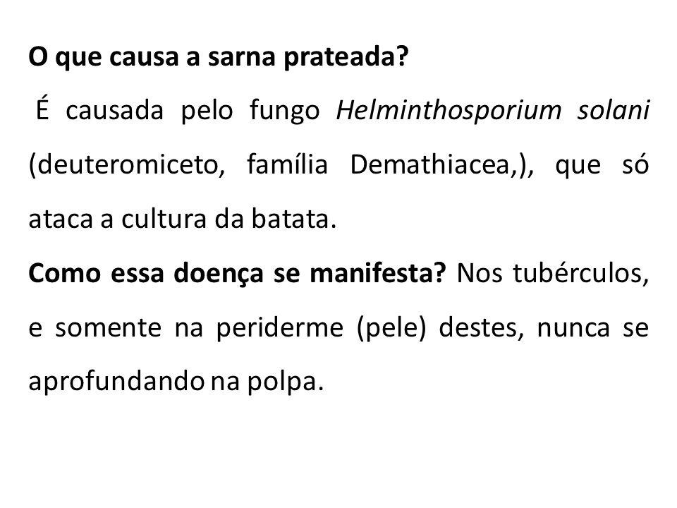 O que causa a sarna prateada? É causada pelo fungo Helminthosporium solani (deuteromiceto, família Demathiacea,), que só ataca a cultura da batata. Co