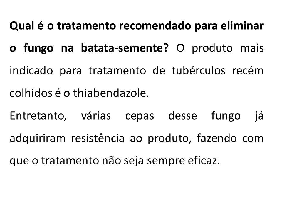 Qual é o tratamento recomendado para eliminar o fungo na batata-semente? O produto mais indicado para tratamento de tubérculos recém colhidos é o thia