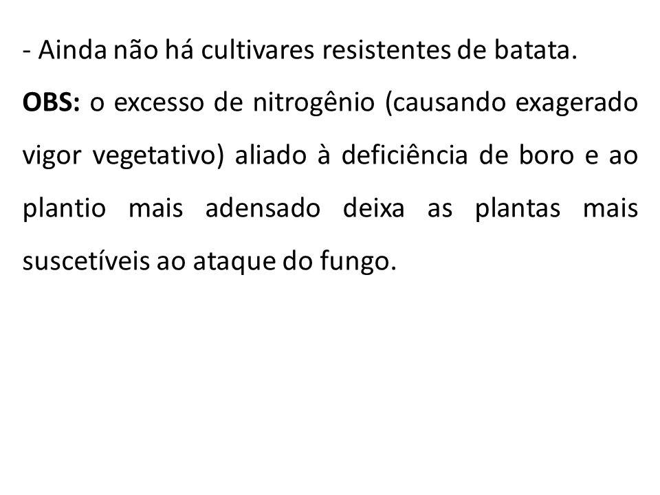 - Ainda não há cultivares resistentes de batata. OBS: o excesso de nitrogênio (causando exagerado vigor vegetativo) aliado à deficiência de boro e ao