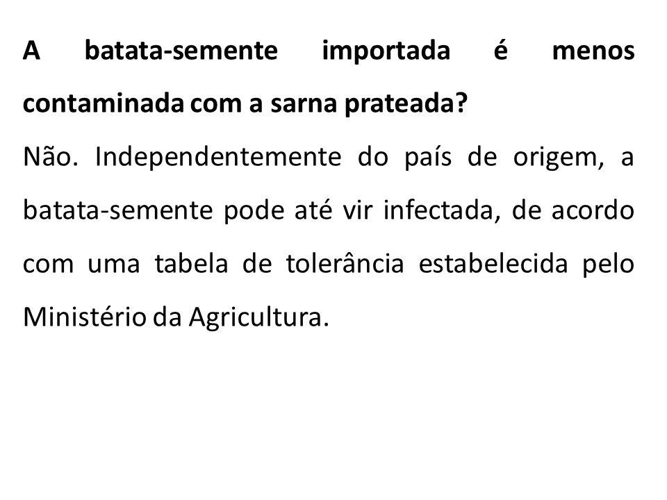 A batata-semente importada é menos contaminada com a sarna prateada? Não. Independentemente do país de origem, a batata-semente pode até vir infectada