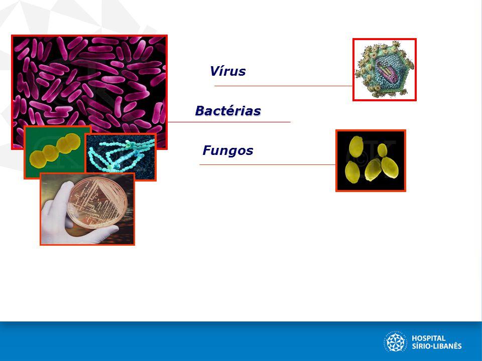 VírusBactérias Fungos