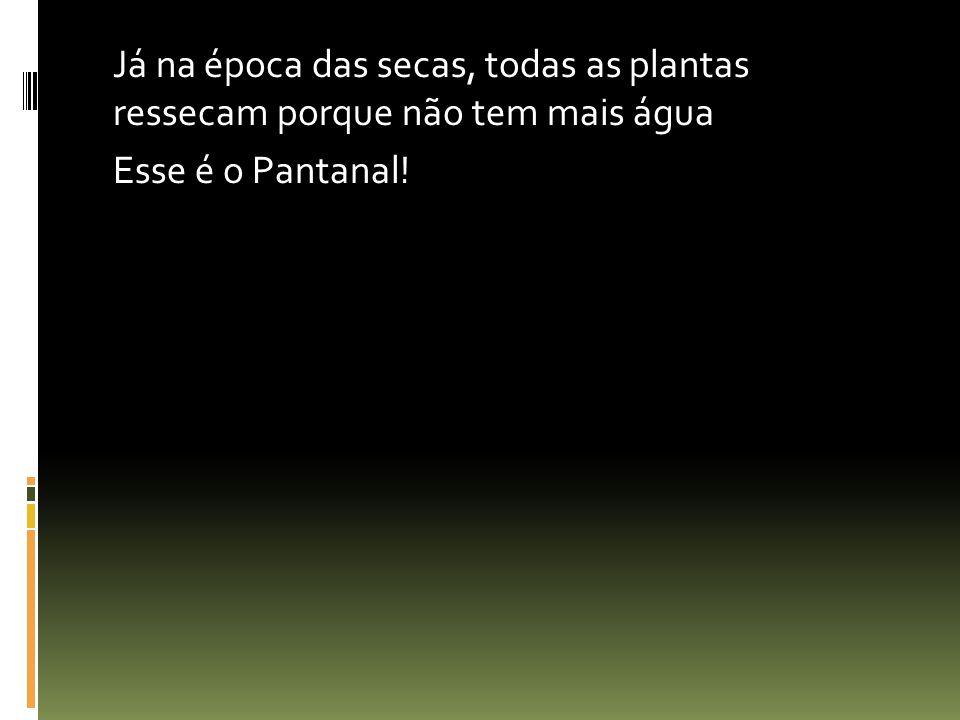 Já na época das secas, todas as plantas ressecam porque não tem mais água Esse é o Pantanal!