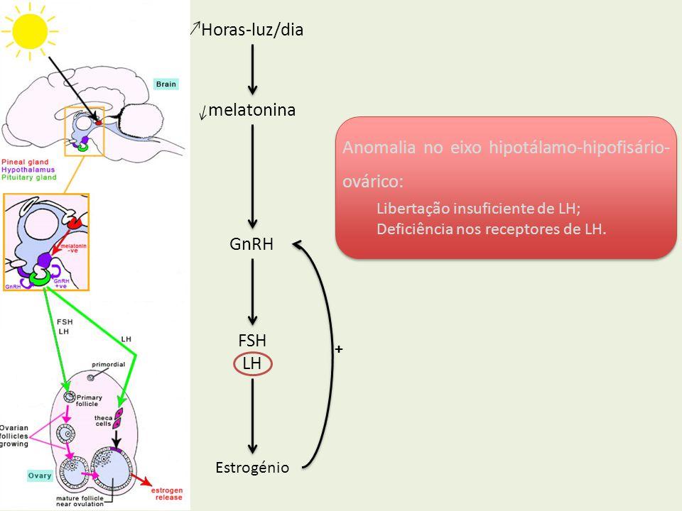 GnRH FSH LH Estrogénio Horas-luz/dia melatonina Anomalia no eixo hipotálamo-hipofisário- ovárico: Libertação insuficiente de LH; Deficiência nos recep