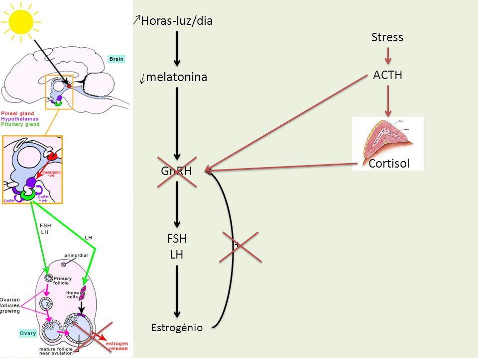 GnRH FSH LH Estrogénio Horas-luz/dia melatonina + Cortisol Stress ACTH