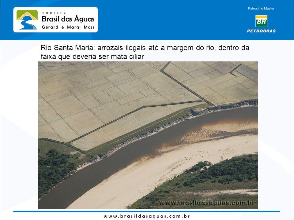 Rio Santa Maria: arrozais ilegais até a margem do rio, dentro da faixa que deveria ser mata ciliar